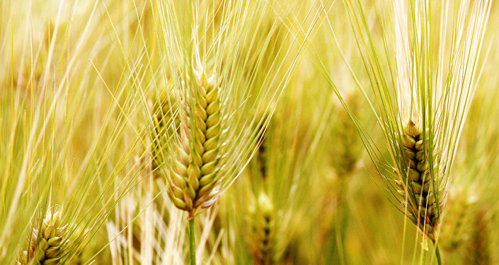 中国商务部:对原产于澳大利亚的进口大麦进行反补贴立案调查