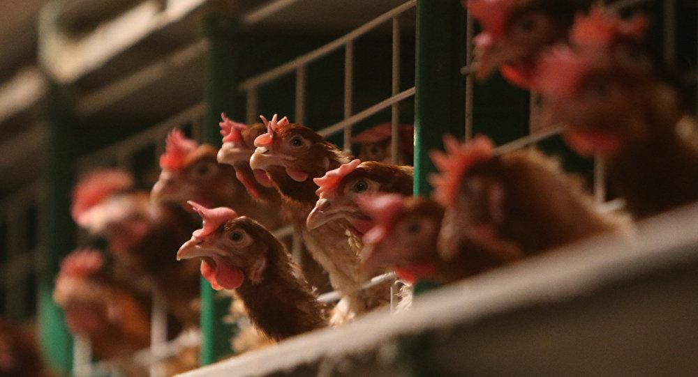 中美官員就美國熟制禽肉輸華問題進行溝通