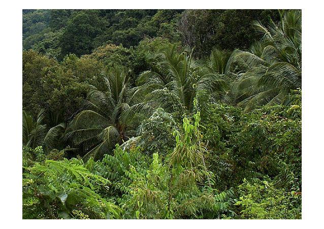越南一家人連續40餘年在熱帶叢林中躲避美國炸彈