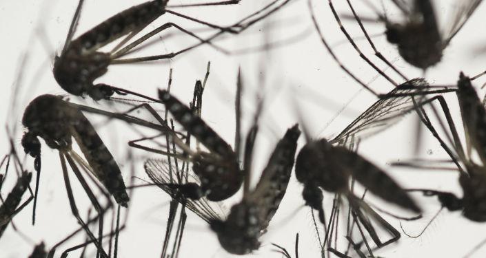細菌幫助人類驅蚊