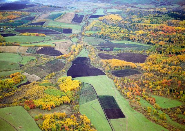 俄阿尔泰边疆区与满洲里就农产品供应问题达成协议