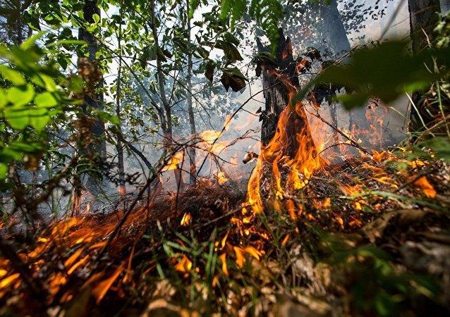 俄伊尔库茨克州3区有紧急火灾危险