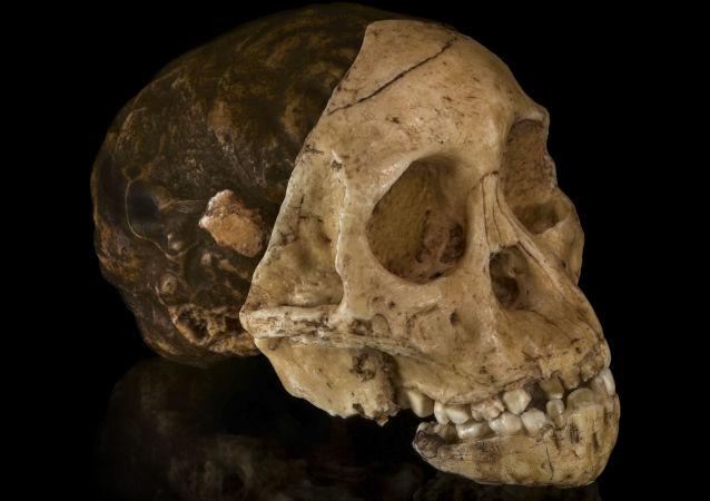 媒体:丹麦发现外星人头骨