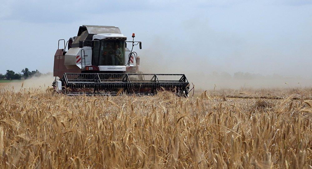 俄农业部长:2018年俄谷物收成达1.1亿吨