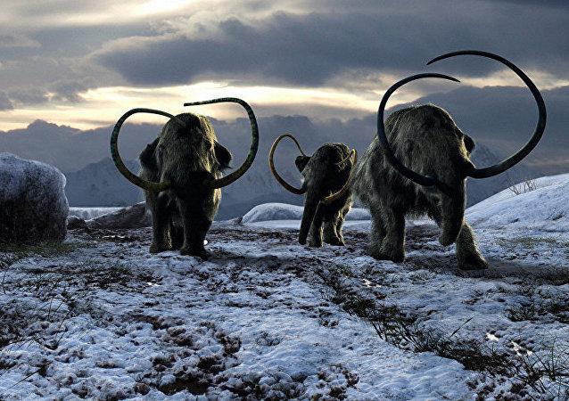 西伯利亞管道工挖出猛獁象遺骸