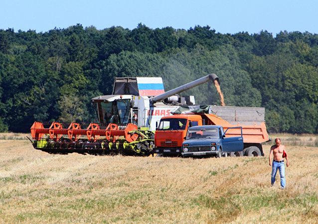 媒體: 俄農業部決定取消小麥稅