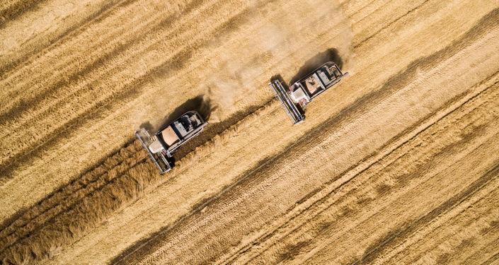 2018年粮食产量有望达到1.05亿吨