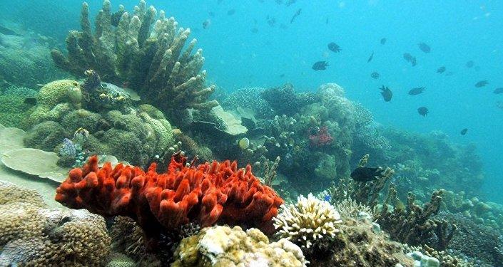 俄远东科学家建造出用于统计海洋生物资源的水下机器人
