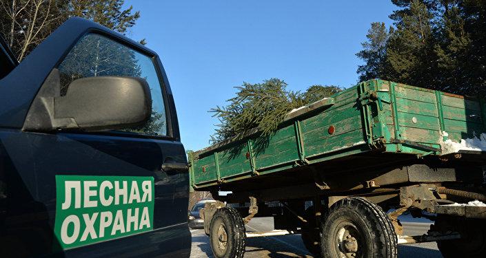 俄联邦林业署提议禁止中国人从西伯利亚俄居民手中采购木材