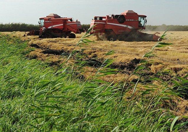 媒体:将在中国建成采用俄技术的稻壳加工厂