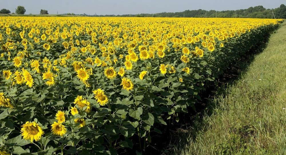 满洲里口岸首次进口俄罗斯荞麦与葵花籽