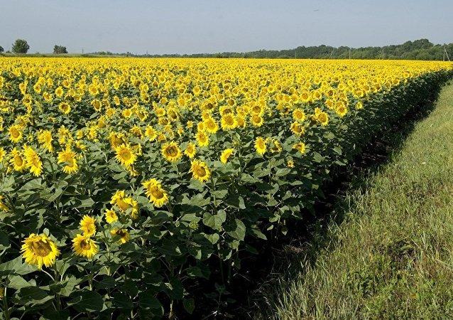 俄农业部:俄明年将向华供应150万吨农产品