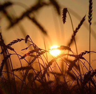 俄计划至2024年将对华农产品出口提高到95亿美元