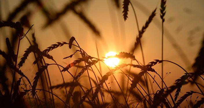 中国投资者将在滨海边疆区建农业综合体