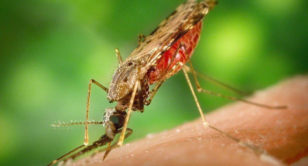世卫组织:2016年全球疟疾病例数量增长