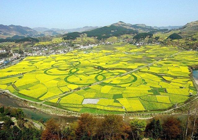 加拿大总理:中国保证9月1日起暂不实施新的油菜籽进口管理措施