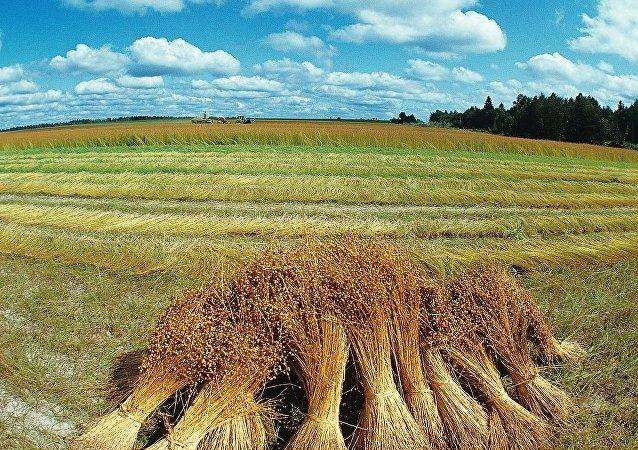 满洲里口岸积极支持进口俄罗斯亚麻籽