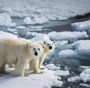 气候改变和人们的行为致北极熊入侵新地