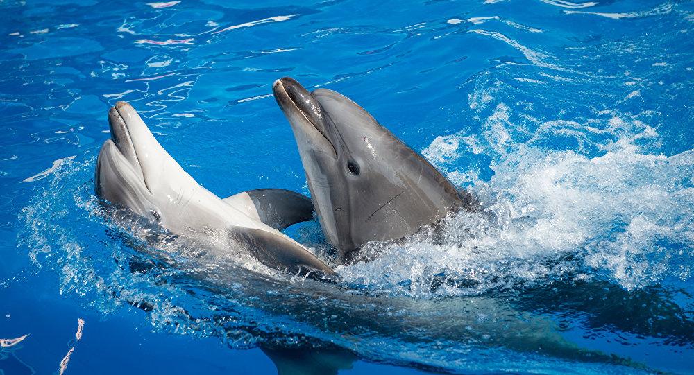 必威体育拨款250万卢布用于黑海海豚救援