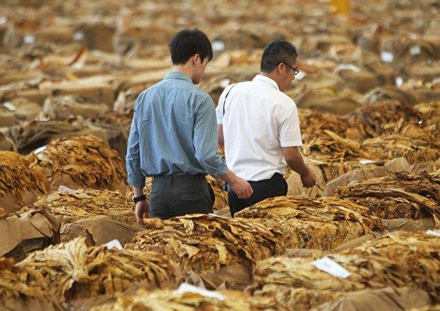 世卫组织:全球烟草需求量自2000年起大幅减少