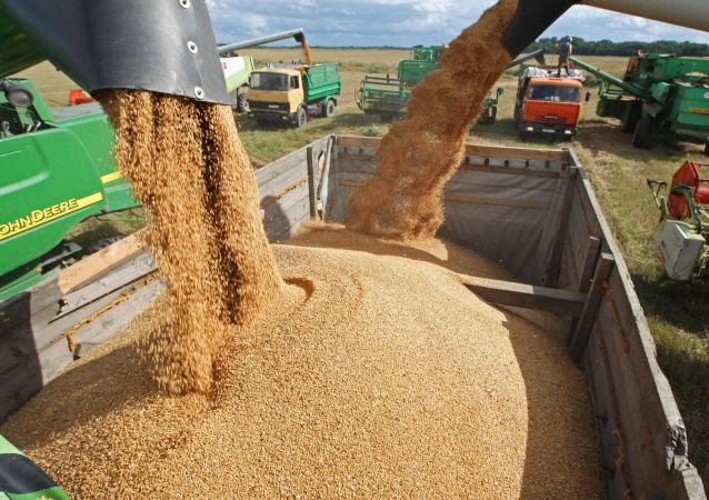 俄羅斯再次調高今年糧食產量預測 將達1.09億噸