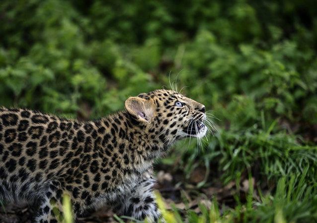 世界自然基金会:近40年来脊椎动物减少约60%