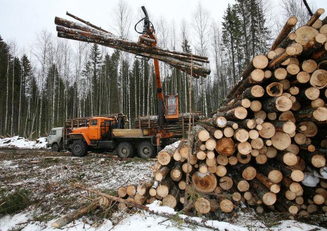 綏芬河鐵路口岸前三季度進口俄木材近500萬噸