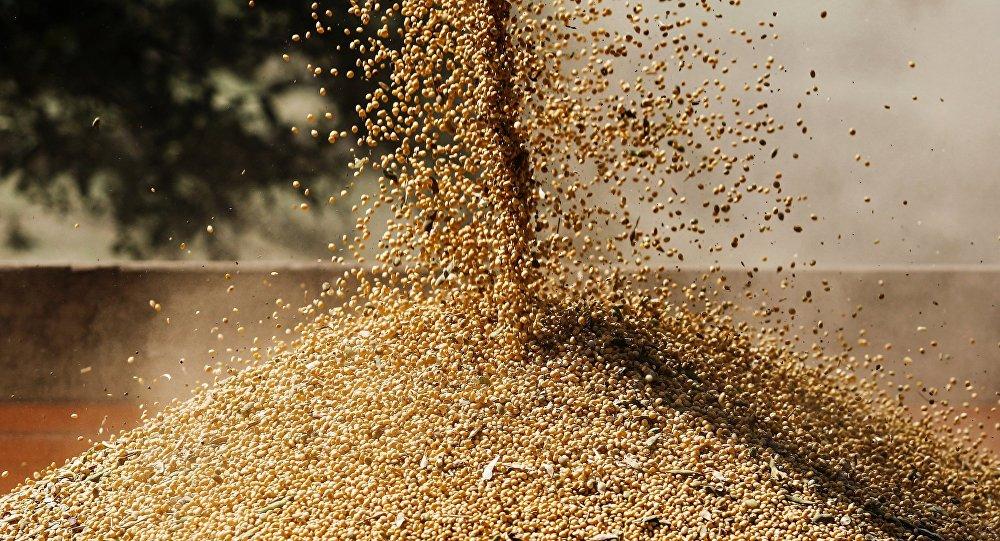 专家:必威体育在中美贸易战中有机会夺取对华农业出口份额