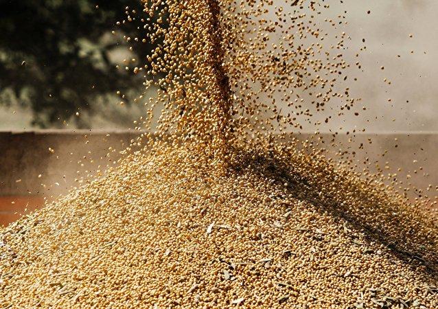专家:俄罗斯在中美贸易战中有机会夺取对华农业出口份额