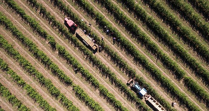 俄中两国应讨论建设大型现代农业企业问题