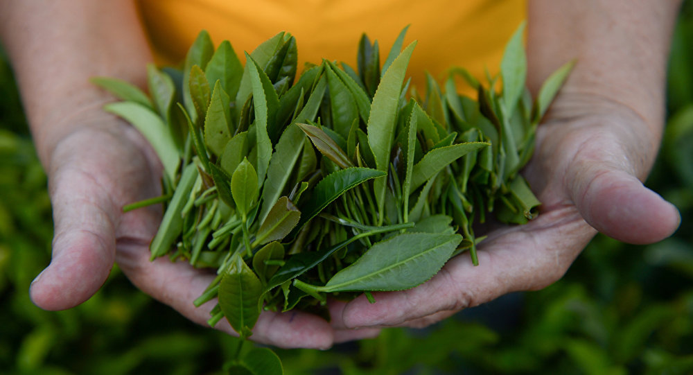 俄青年發明者正在研發用於出售中國茶的自動販賣機