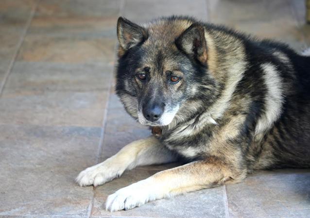 在美国一只狗被批准发放失业救济金