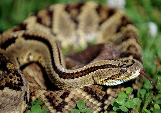湖南男子在公園放生兩條蛇被拘