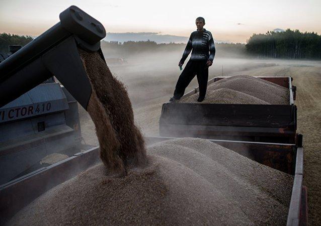 2017-2018农业年度俄罗斯计划出口3000-3500万吨谷物