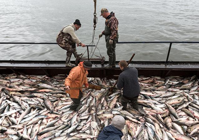 中國專家6月將訪問俄羅斯魚類加工企業