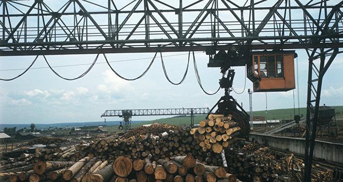 中国企业计划在俄远东建造木材工业园