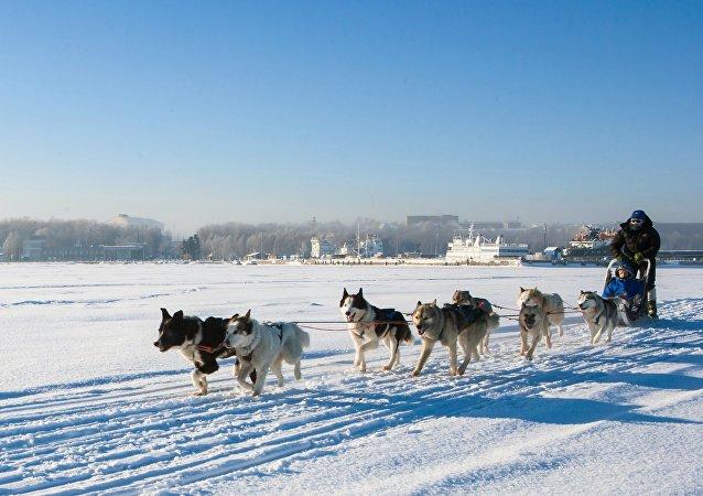 在贝加尔湖上体验狗拉雪橇:伊尔库茨克狗拉雪橇大赛开幕