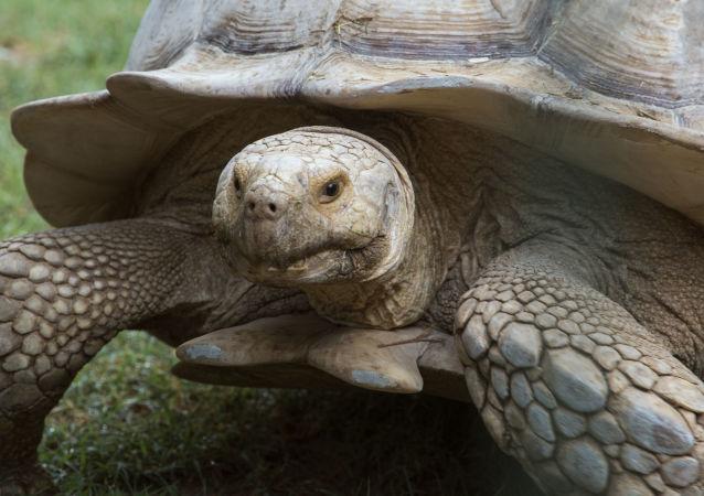 台灣海關查獲三隻珍稀烏龜  價值近10萬美 (資料圖片)