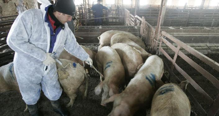 俄羅斯與中國將就非洲豬瘟疫情舉行電話會談