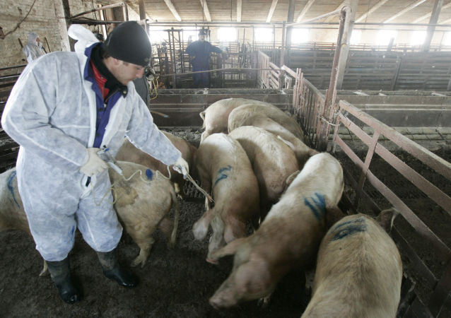 俄罗斯与中国将就非洲猪瘟疫情举行电话会谈
