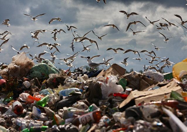 調查:美國人每年扔掉價值1650億美元的食品
