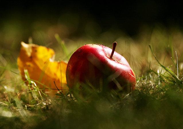 苹果着色谁说了算?科学家有新发现