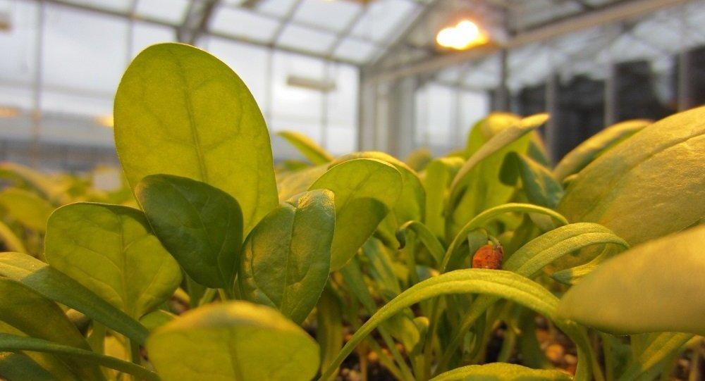 科學家發現植物中有類似神經系統的系統
