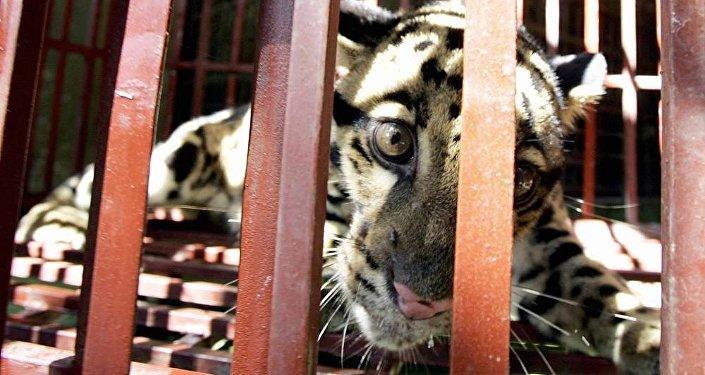 越南对野生动物来说是一个安全国度吗?