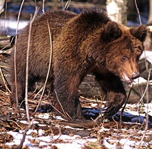 中国动物园将借鉴俄滨海边疆区野生动物园理念建设