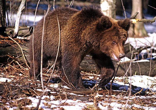中國動物園將借鑒俄濱海邊疆區野生動物園理念建設