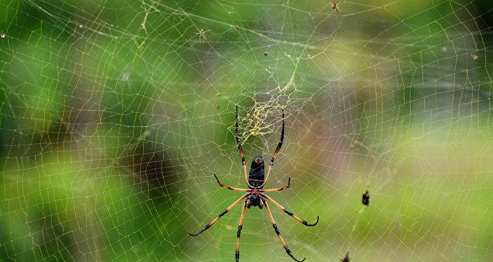 科学家们发现蜘蛛只用一年时间就能消灭人类