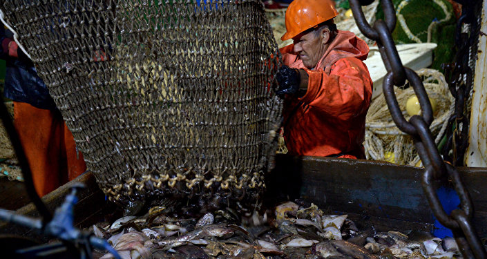 日本媒体:俄罗斯渔业成功复苏