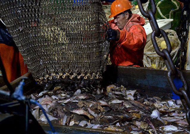 出席东方经济论坛的印度代表望借鉴俄萨哈林州远海捕鱼经验