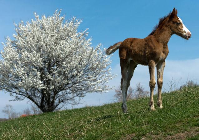 一匹长得像迪斯尼公主的马俘获网民的心